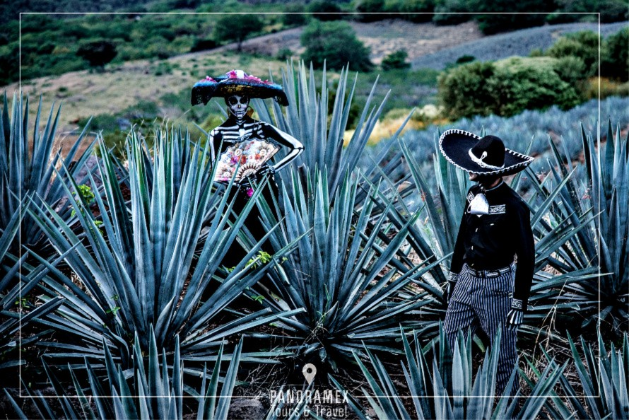 Tour Tequila Mexico