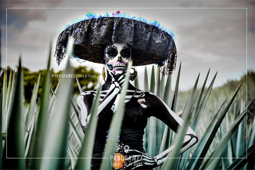Tequilatours #vivetequila #Tequila