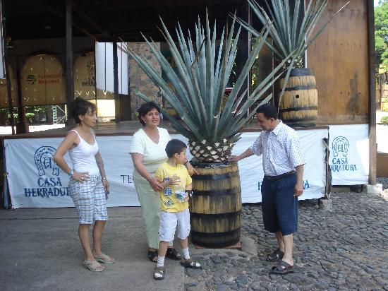 Casa herradura Tequila en Amatitan jalisco Mexico